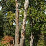 Sculpture Arboretum des Barres
