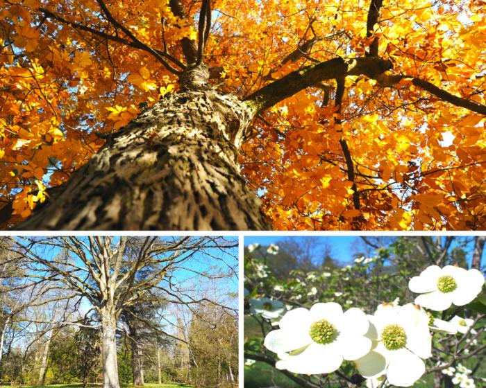 saisons Arboretum des Barres