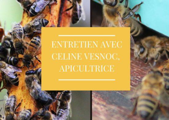 Ruches de Céline Vesnoc
