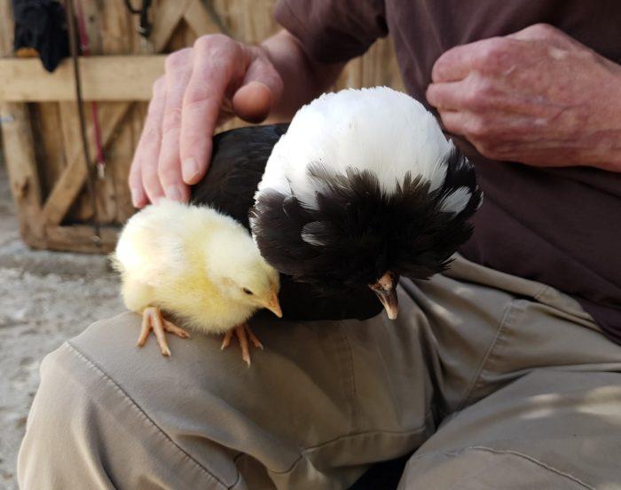 La Ferme Coqalane – Une ferme pour tous
