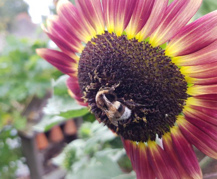 La Ferme Coqalane – préservation de laBiodiversité