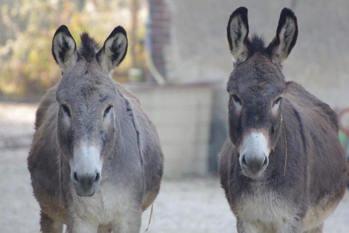 La ferme Coqalane – ânes