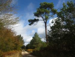 Promenade des arbres remarquables