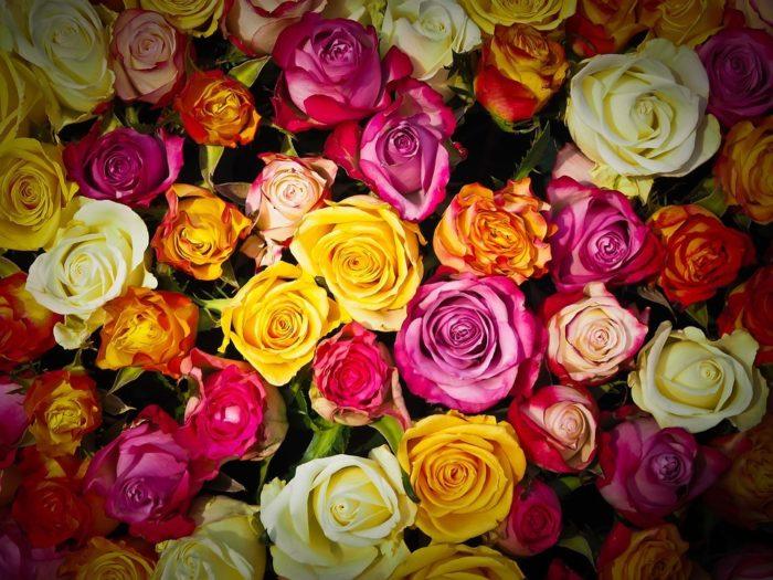 cours floral carton octobre