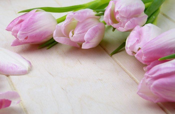 flower-3070161-960-720