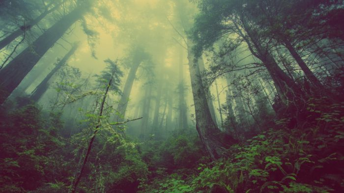 forest-931706