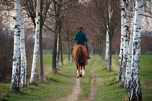 horse-4063165–340