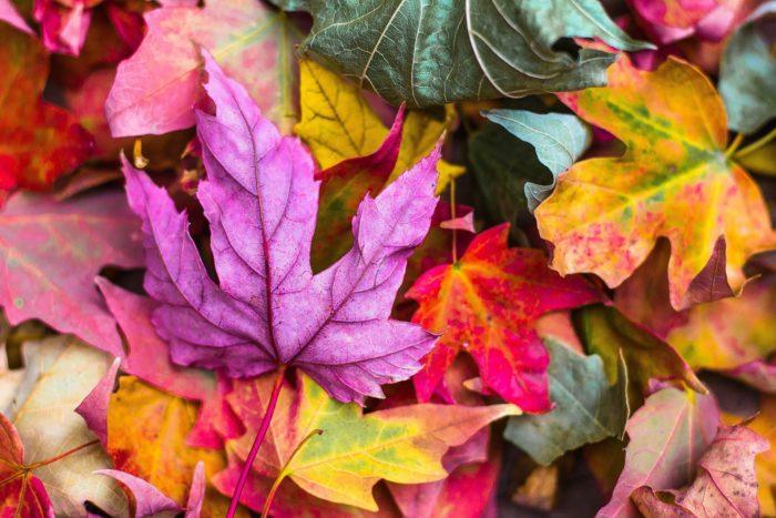 nature automne