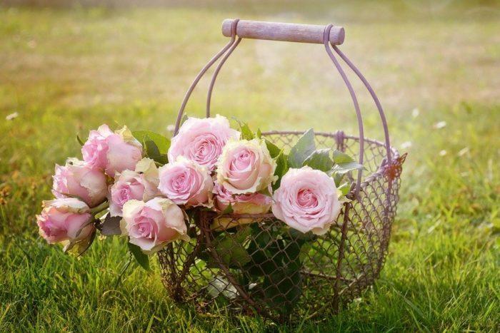 roses-1566792-960-720